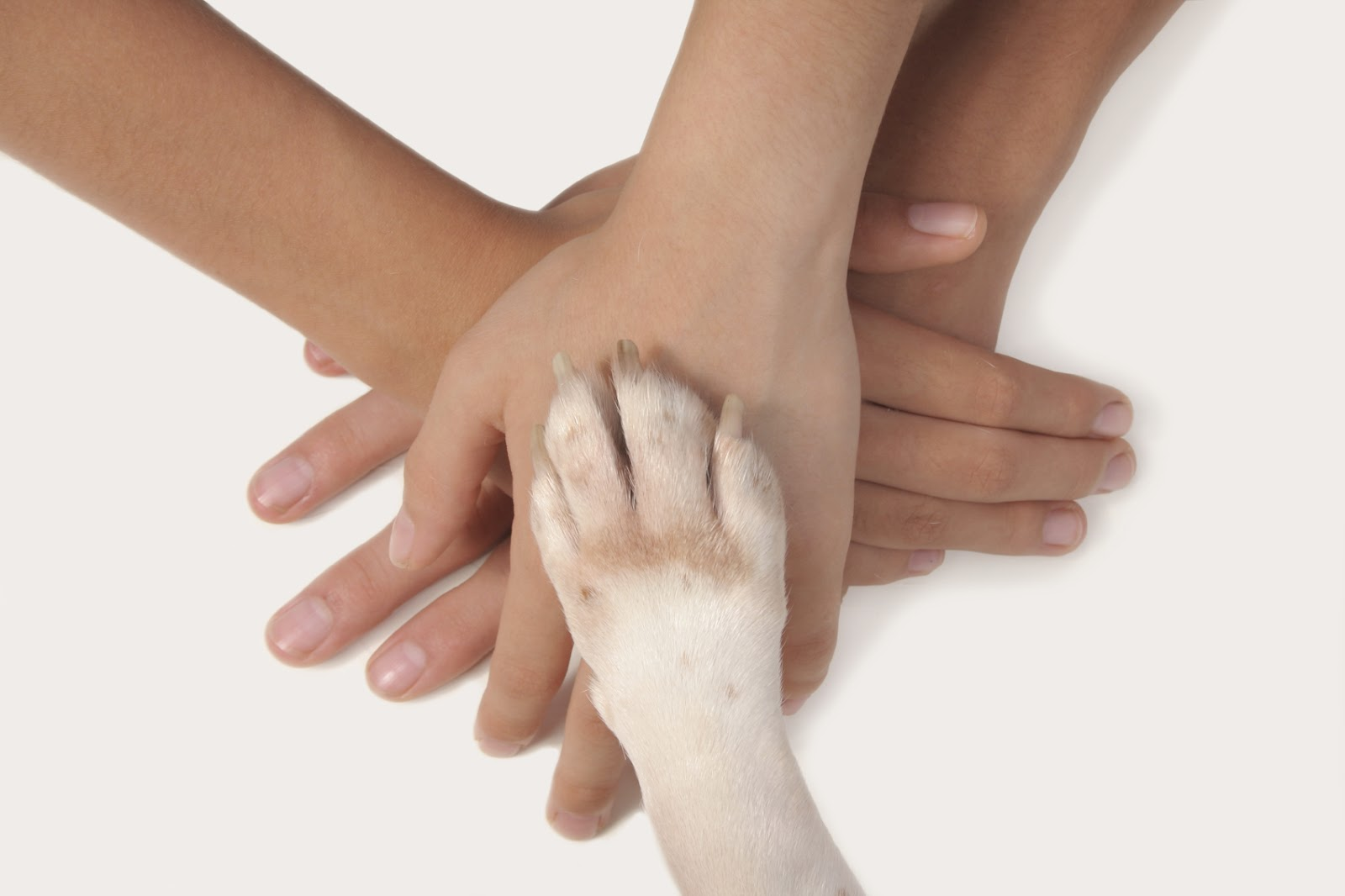 pet therapy mani